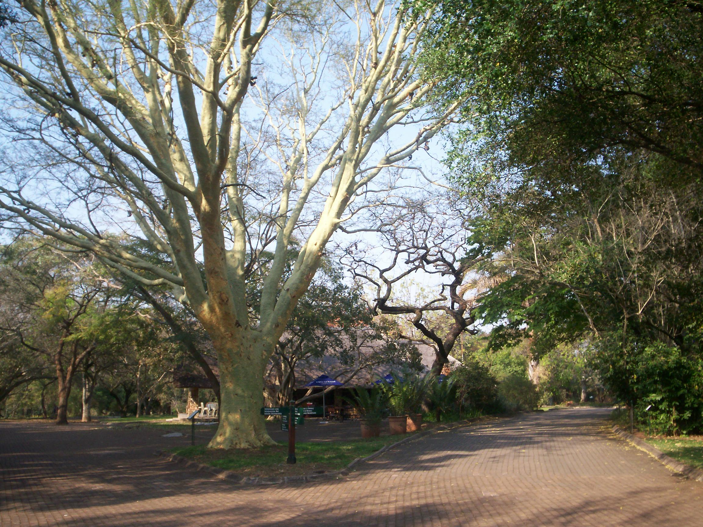 Lowveld National Botanical Gardens