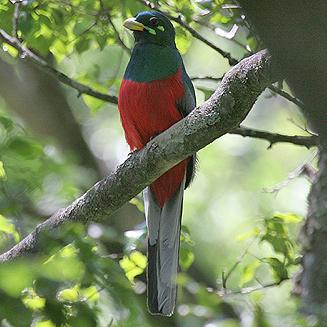Birding at Rimer\'s Creek