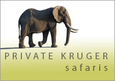 Private Kruger Park Safaris