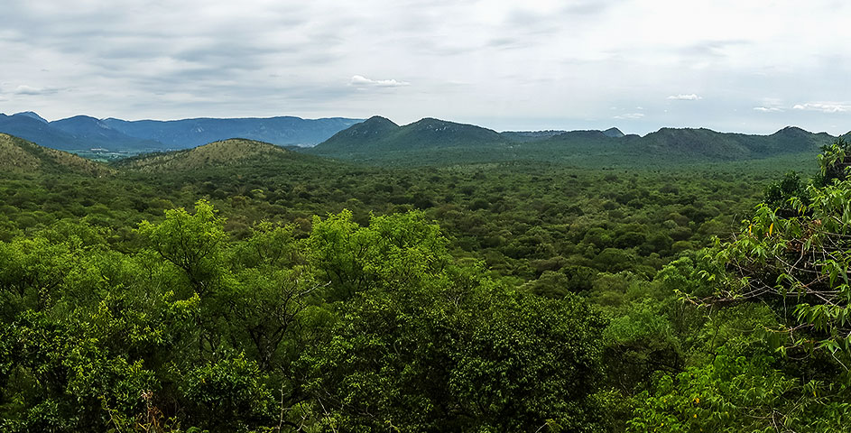 The uninterrupted bushveld of the Genesis Route